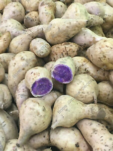 5 Fresh White Purple Flesh Japanese Okinawan Sweet Yam Hawaiian Potatoes Tubers