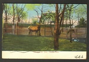 1906 Postmarked Postcard Lincoln Park Zoo Chicago Illinois IL