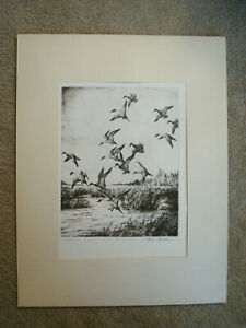 Hans Kleiber Original American Pencil Signed Etching Western Pintails  $24.99