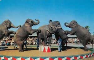 Elephants Winter Quarters Ringling Brothers Bailey Circus 8419 $5.99