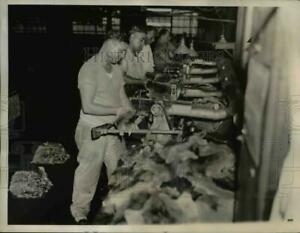 1935 Press Photo The hair of the rodents transformed in a Hudson Seal Coat