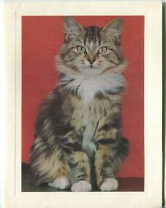VINTAGE LONG HAIR TABBY MAINE COON CAT ANIMAL LITHOGRAPH ART PRINT NOTE CARD $199.00