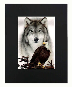 Eagle amp; Wolf 8x10 matted Art Print Printed Poster Decor picture Gift Display