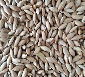 Alpiste 100% Pure Canary Seed Natural Choose size (1-30 Pounds)