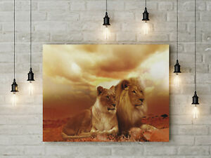 Two Lions Animals African Safari Framed Canvas Print Wall Art pp31