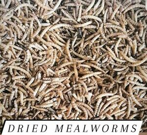 Mealworms Freeze Dried Bulk for Chickens and or Fish Choose Size