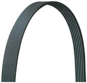 Serpentine Belt Dayco 5070687DR