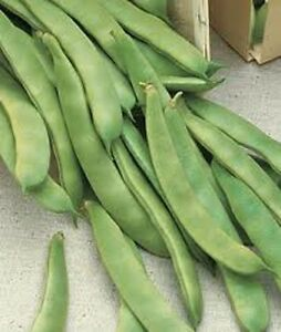 Original Italian Prolific Green Romano Flat Pole Bean Heirloom Seeds