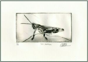 A LARGE GRASSHOPPER Original ETCHING Signed Numbered Limited Edition Art Print $34.00