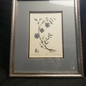 Rare Dan Mitra Etching Painted And Signed Framed Under Glass Blue Buttercup $140.00