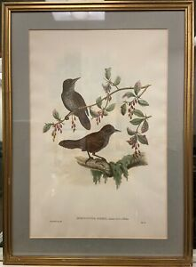 Hand colored ornithological lithograph by J. Gould amp; W. Hart $199.00