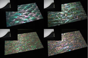 Abalone Enhanced Adhesive Veneers (MOP Mother of Pearl Shell Luthier Lure)