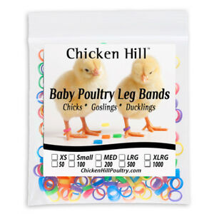 100 Chick Leg Bands 1 4quot; Size 4 Poultry Chickens Ducklings light geese Day Old