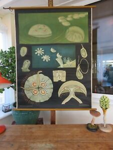Rare early vintage JELLYFISH school chart by JUNG KOCH QUENTELL lithograph