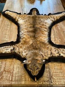 A Rated Bobcat Taxidermy Rug Mount Fur Pelt Closed Mouth