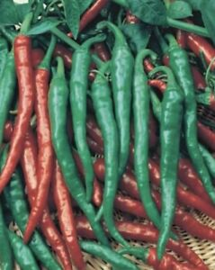 50 Plus Long Slim Cayenne Pepper Seeds  Hot
