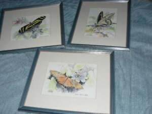 ORIGINAL DRAWINGS 3 DIFFERENT BUTTERFLY PICTURES $75.00