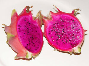 2 PURPLE DRAGON FRUIT  tree,-plant  With 9 Inch Cutting