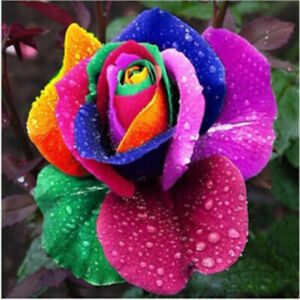1 Bag/200Pcs Colorful Rainbow Rose Flower Seeds Home Garden Plants Multi-Color