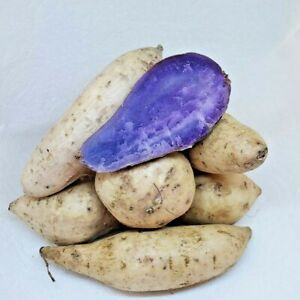 Fresh Purple Flesh Ubi Sweet Yam Potatoes Tubers 2 Pound FREE PRIORITY SHIPPING