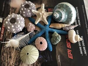 Lot of Seashells, 13 of all kind of Sea Shells