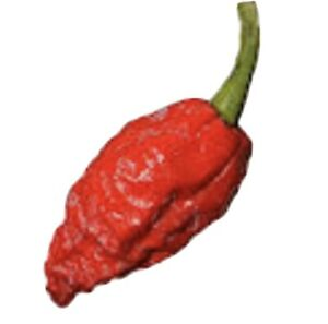 25 Fresh Super Hot Ghost Bhut Jolokia Red Pepper Seeds Free Shipping