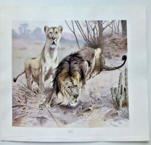 WILHELM KUHNERT LITHOGRAPH LIONS HUNTING
