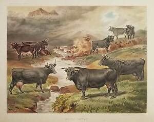 CHROMOLITHOGRAPH PLATES  Dairy Farming Being the Theory Practice and Methods