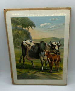 Print Cattle Cows Lithograph Black White Brown Mother Cow w Calf $12.00