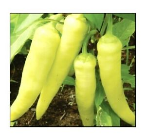 Sweet Banana Pepper Seeds  | NON-GMO | Fresh Garden Seeds