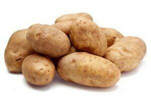 GOLDEN Russet Potatoes 10 Lbs Fast Shipping