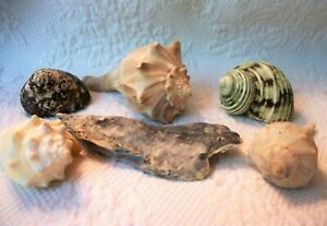 Mixed Sea Shell Lot