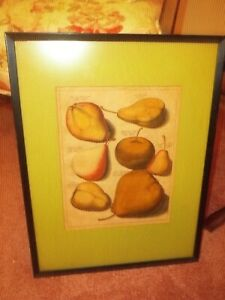 2 Antique Original 1700#x27;s Jacok Folkema Print Etching by Knoop Pears Apples $250.00