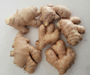 NEW Fresh Organic - Non GMO Ginger Root Edible or ready to plant - 1/4 lb (4oz)