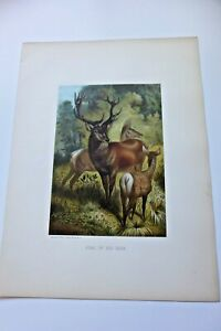 LOUIS PRANG CHROMOLITHOGRAPH OF STAG OR RED DEER $20.00