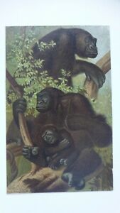 LOUIS PRANG CHROMOLITHOGRAPH OF GREAT APES $15.00