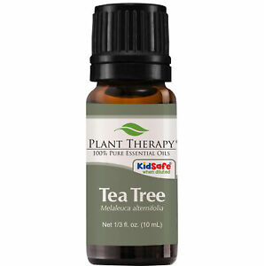 Plant Therapy Tea Tree Essential Oil | 100% Pure, Undiluted