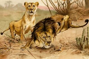 King of Beasts Lions F.W. Kuhnert