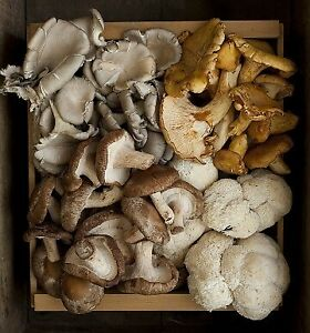 Wild Mushroom Spores Morel Bolete Chanterelle Maitake Oyster Spore Grow Kit