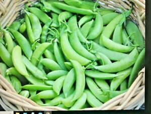 50 SUPER SUGAR SNAP PEA SEED Vegetable Non GMO USA Benefits St Jude