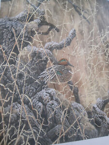 Chris Forrest Green Winged Teal Duck Art Print Signed and Numbered $119.99
