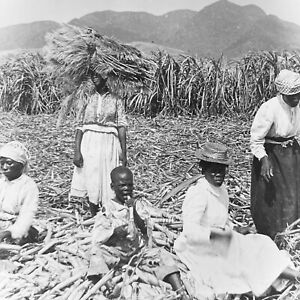 Vtg Keystone Magic Lantern Glass Slide Photo Sugar Cane Workers Kitts Island