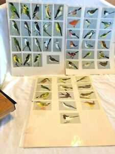 50 Vintage BIRD Cards Cigarette Style w Silver and Chromolithographic Color $249.00