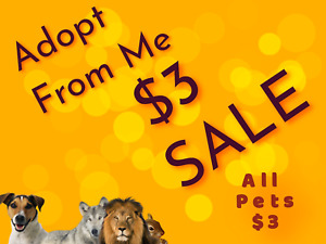 $3 Adopt Me Pets and Bundles Everything you see is $3 $3.00