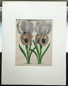 3 HAND COLORED 19th CENTURY BOTANICAL LITHOGRAPHS BY J. Andrews  W. G. Smith $300.00
