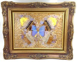 Vintage Real Moth Butterfly Wings Natural Art Taxidermy Kaleidoscope Framed J891