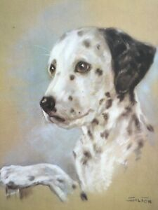 Dalmation Dog Portrait by Animal Artist Silton c.1960 large vintage print $39.00