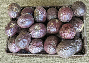 Fresh Homegrown Passion Fruit 3-4 lbs (SHRIVELED / UGLY) DISCOUNT