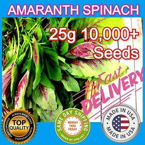 10,000+ Amaranth Spinach Seed Asian Hat Rau Den garden Vegetable Nutrition Lot