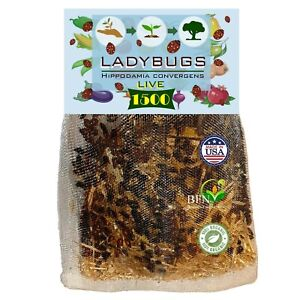 1500 Live Ladybugs for Garden - Bag of Live Ladybugs - Guaranteed Live Delivery!